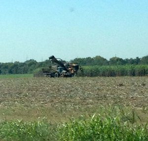 Harvesting sugarcane in Ascension Parish in 2013